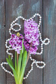 Violet Hyacinth flowers — Stock Photo