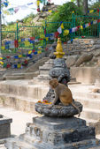 Monkey in Swayambhunath religious complex — Stock Photo
