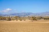 Dunes of Maspalomas — ストック写真