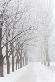 Winter park covered with white snow — Stock Photo