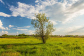 Field on a background of the sky — Stock Photo