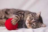 Cat playing with ball of red yarn — Stock Photo