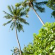 Picture of nice palm trees in the blue sunny sky  — Stock Photo #57211449