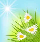 Summer nature background with daisy, grass, blue sky, sunny rays — Stock Vector