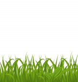 Fresh green grass isolated on white background, space for your t — Stock Vector