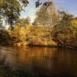 Colorful autumn sunny weather over the wild river in the forest — Stok fotoğraf #55556793