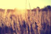 Autumn dry field grass strands — Stock Photo