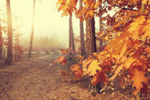 Colorful beautiful autumn in the forest — Stock Photo