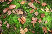 Leaves lying on the moss — Stock Photo