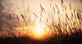 Golden sunset on a wild meadow — Stockfoto