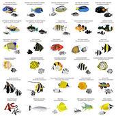 Peces marinos — Vector de stock
