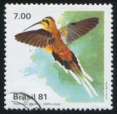 Hummingbird Phaethornis pretrei — Zdjęcie stockowe