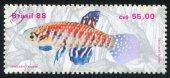 Fresh-water Fish Xavantei — Stock Photo
