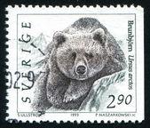Orso selvatico — Foto Stock