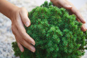 Environmental conservation — Stock Photo