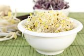 Alfalfa sprouts and radish sprouts — Stock Photo