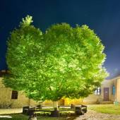 Green glowing tree in the night park — Stock Photo