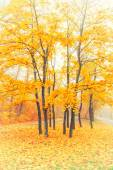 Beautiful autumn forest — Stock Photo