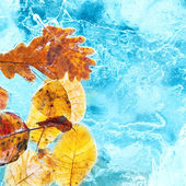Fallen autumn leaves in the blue ice — Foto de Stock