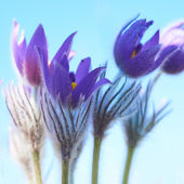 Elegance Violet flowers — Stock Photo