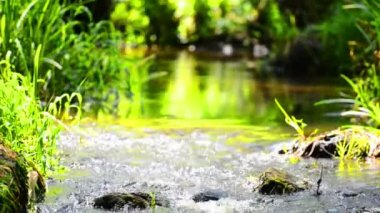 Stream in the tropical forest — Stock Video