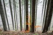Tajemnicza mgła w lesie — Zdjęcie stockowe