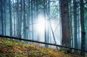 Mysterious fog in green forest — Stock Photo