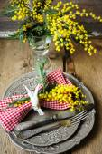 Spring time, yellow mimosa flowers — Stock Photo