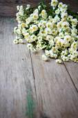 Yaz çiçek — Stok fotoğraf