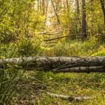 Beautiful autumn forest — Stock Photo #57378485
