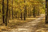 秋天的森林通过通路 — 图库照片