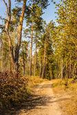 Um tempo maravilhoso para folhas de outono, dourado, dias quentes — Foto Stock
