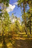 Forest autumn landscape — Stock Photo