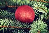 One christmas ball over tree. — Stok fotoğraf
