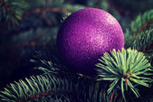 One christmas ball over tree. — Stock Photo