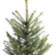 Small, real undecorated bare Christmas tree — Stock Photo #61700297