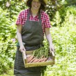 Woman harvesting carrots — Stock Photo #58136273