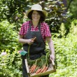 Woman harvesting carrots — Stock Photo #58136313