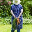 Woman harvesting carrots — Stock Photo #58136563