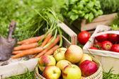 Apples and vegetables — Stok fotoğraf