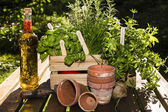 Herbs and herbs in oil — Stock Photo