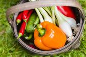 Zbioru warzyw — Zdjęcie stockowe