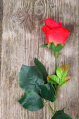 Beautiful rose on a wooden background — Foto de Stock