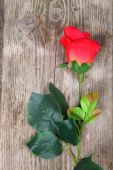 Beautiful rose on a wooden background — Stok fotoğraf
