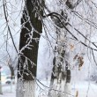 Tree branches covered with hoarfrost. — Stock Photo #62230407