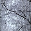 Tree branches covered with hoarfrost. — Stock Photo #62230415