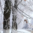 Tree branches covered with hoarfrost. — Stock Photo #62230421