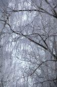 ветви дерева, покрытые инеем. — Стоковое фото