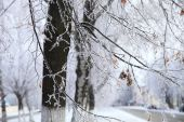 Tree branches covered with hoarfrost. — Stock Photo