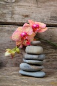 Zen stones and orchid — Stock Photo